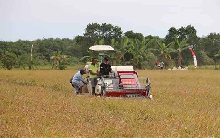 Alat pemanen padi di Kabupaten Pulang Pisau.