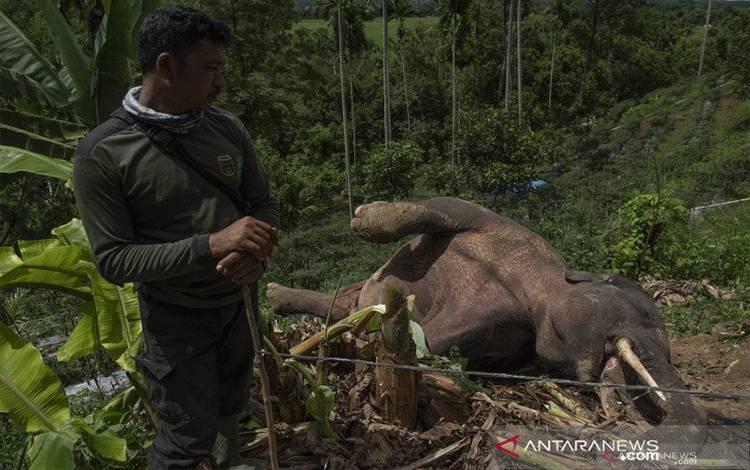 Gajah mati.