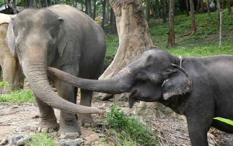 Sow, kanan, bersama Jahn, kiri. Sumber: world animal protection/mirror.co.uk