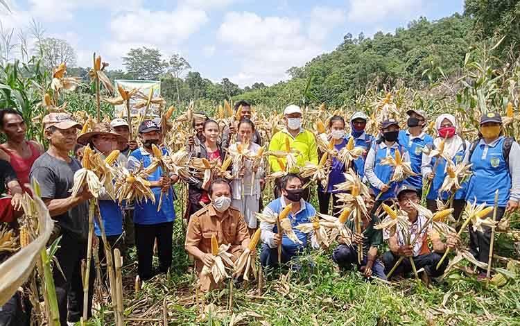 Panen jagung pada Kelompok Tani Jakat Poon, Desa Sumber Garunggung Kecamatan Dusun Tengah.
