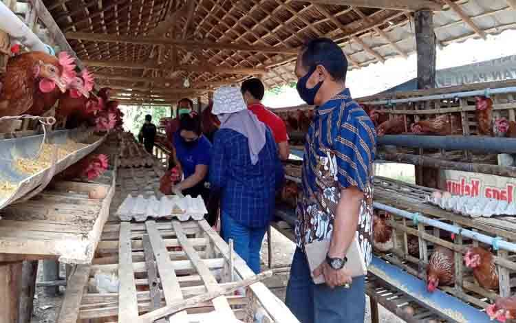 Komisi II DPRD Barito Timur meninjau peternakan ayam petelur yang dikelola Pemerintah Desa Siong, Jumat, 18 September 2020.