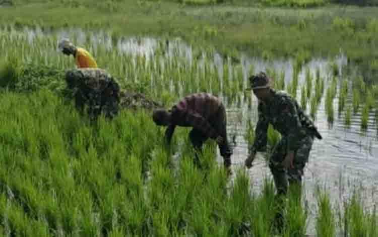 Personel Koramil 1011-04 Selat saat mendukung para petani dalam program ketahanan pangan.