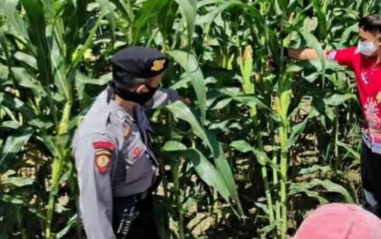 Personel Polsek Kapuas Hilir saat menyambangi perkebunan jagung di Kelurahan Sei Pasah.