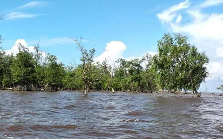 Inilah lokasi warga Desa Lampuyang untuk mencari kerang, ditengah ancaman serangan buaya.
