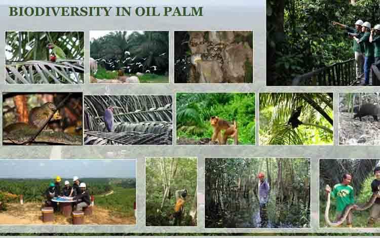 Kompilasi foto keanekaragaman hayati yang ditampilkanKetua Bidang Sustainability pada Gabungan Pengusaha Kelapa Sawit Indonesia atau GAPKI, Dr Bandung Sahari.