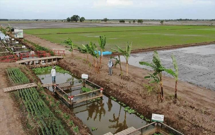 Kawasan food estate di Desa Belanti Siam Kabupaten Pulang Pisau.