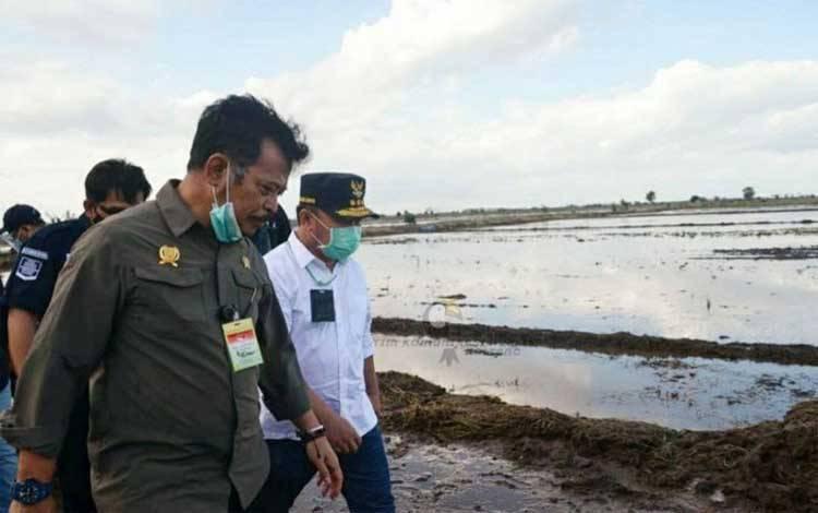 Menteri Pertanian saat mengecek lokasi food estate di Pulang Pisau