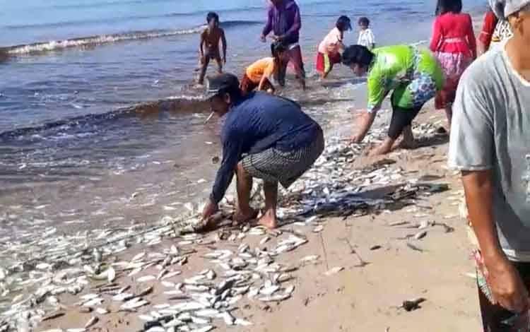 Sejumlah warga saat menangkap ikan hasil jaring ikan nelayan di Desa Ujung Pandaran.