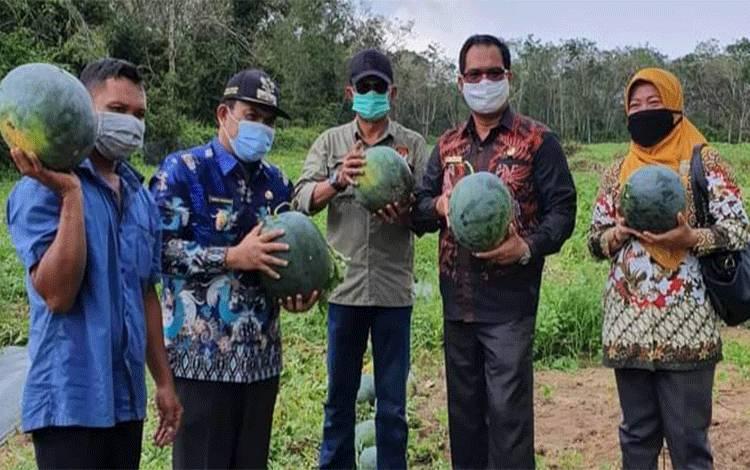 Wabup Kobar Ahmadi Riansyah saat mengikuti panen semangka di Desa Sido Mulyo, Kecamatan Pangkalan Banteng, Jumat, 13 November 2020.