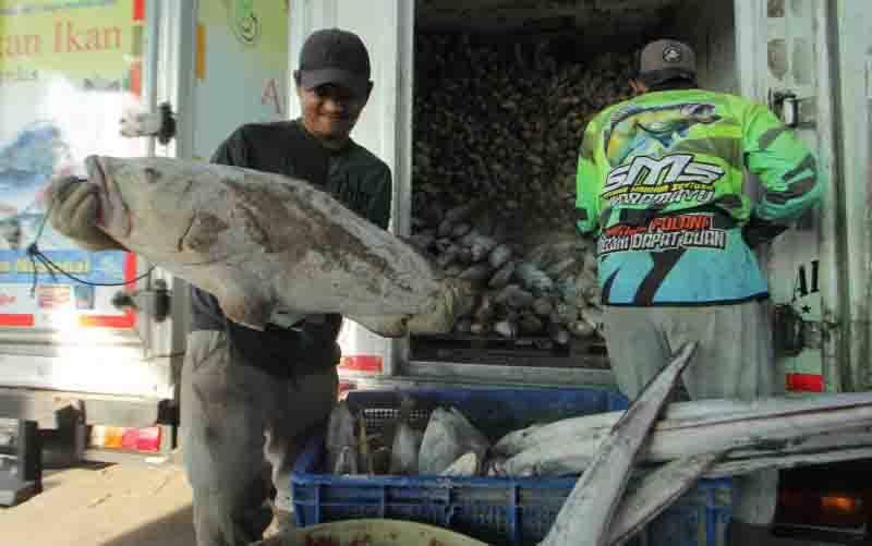 Pekerja mengumpulkan ikan hasil tangkapan nelayan di tempat pelelangan ikan, Karangsong, Indramayu, Jawa Barat, Sabtu (3/10/2020). Kementerian Kelautan dan Perikanan mengungkapkan penerimaan negara bukan pajak (PNBP) bidang pengelolaan ruang laut hingga bulan September 2020 sebesar Rp6,9 miliar atau naik dibanding periode yang sama tahun lalu sebesar Rp3,7 miliar. (foto : ANTARA FOTO/Dedhez Anggara/foc)