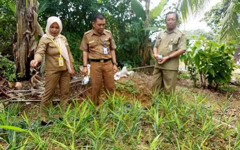Plt Kepala Dinas Pertanian Barito Utara meninjau UPTD Balah Benih Tanaman Pangan dan Hortikultura.