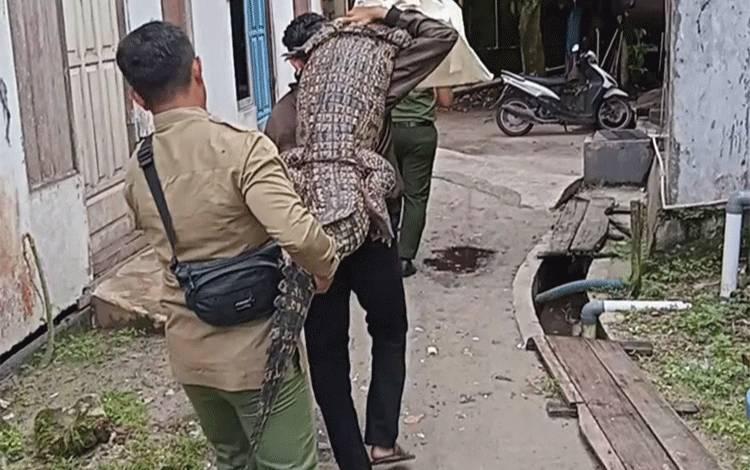 Petugas BKSDA Gendong Buaya