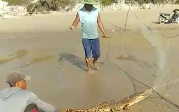 Sejumlah nelayan berupaya melepas buaya yang terperangkap di jaring milik nelayan Desa Ujung Pandaran