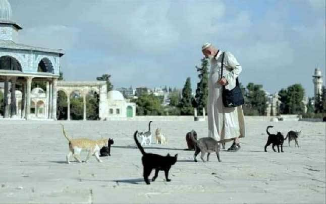 Ghassan Younes, warga Palestina yang dikenal kebaikannya karena suka memberi makan kucing dan burung di Masjid Al-Aqsa. Ia wafat pada 19 Januari 2021 karena Covid-19. (Foto: Getty Image)
