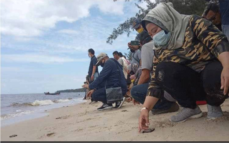 Bupati Kobar Nurhidayah saat melepas tukik di TWA Tanjung Keluang.