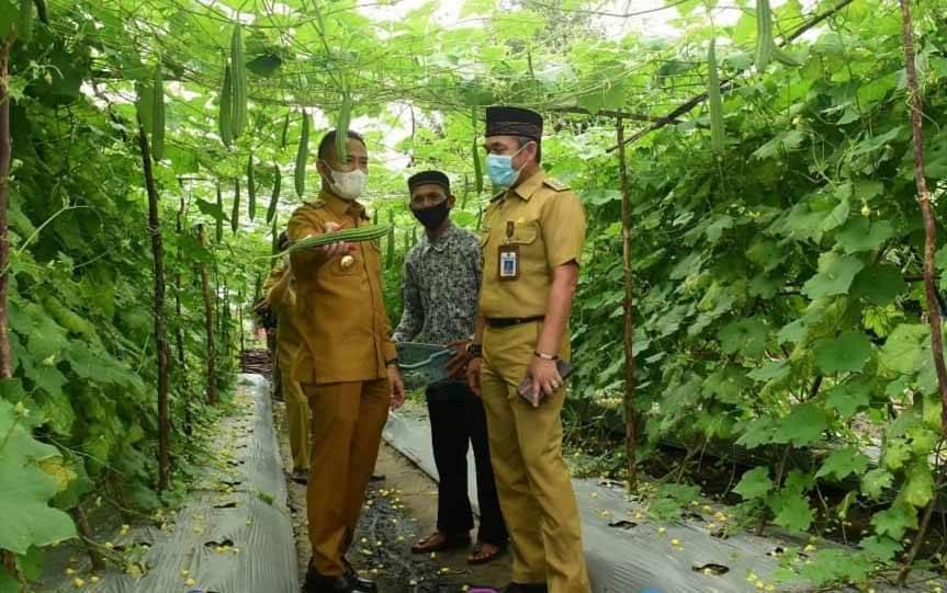 Wali Kota Palangka Raya, Fairid Naparin saat panen buah di perkebunan warga.