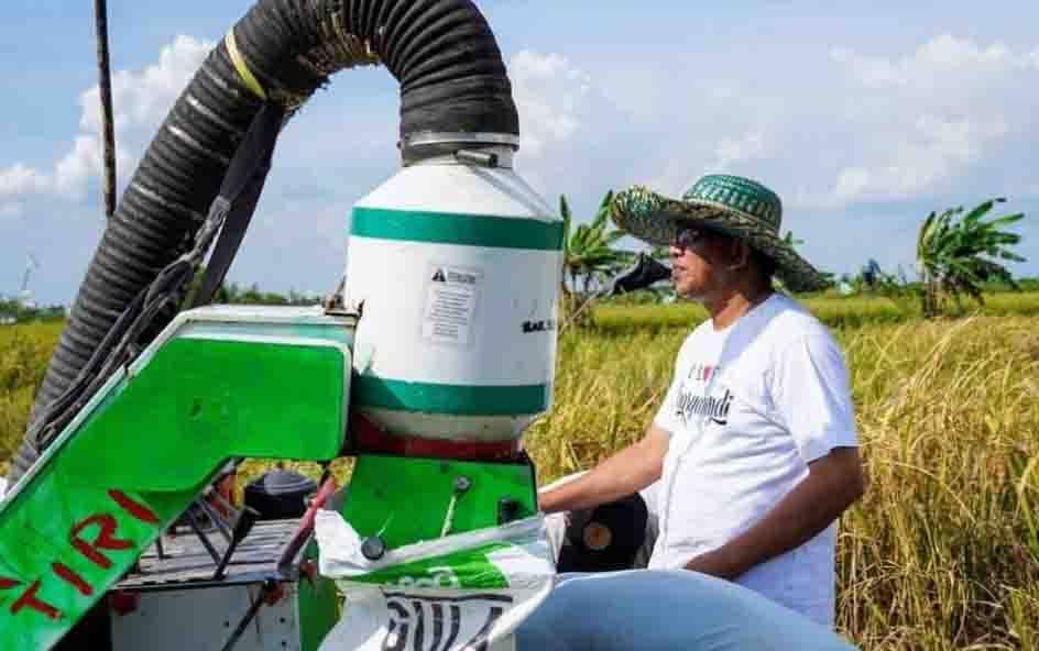 Wabup Sukamara, Ahmadi mengikuti panen padi di Desa Pulau Nibung, Kecamatan Jelai