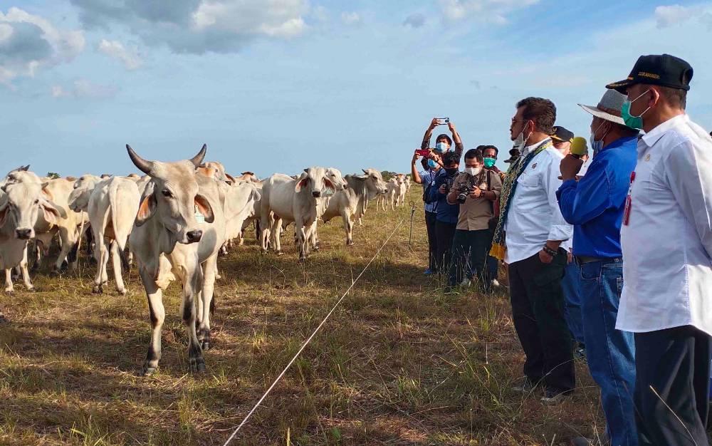 Menteri Pertanian RI, Syahrul Yasin Limpo didampingi Gubernur Kalteng dan Bupati Sukamara saat meninjau peternakan sapi di Sukamara Ranch.