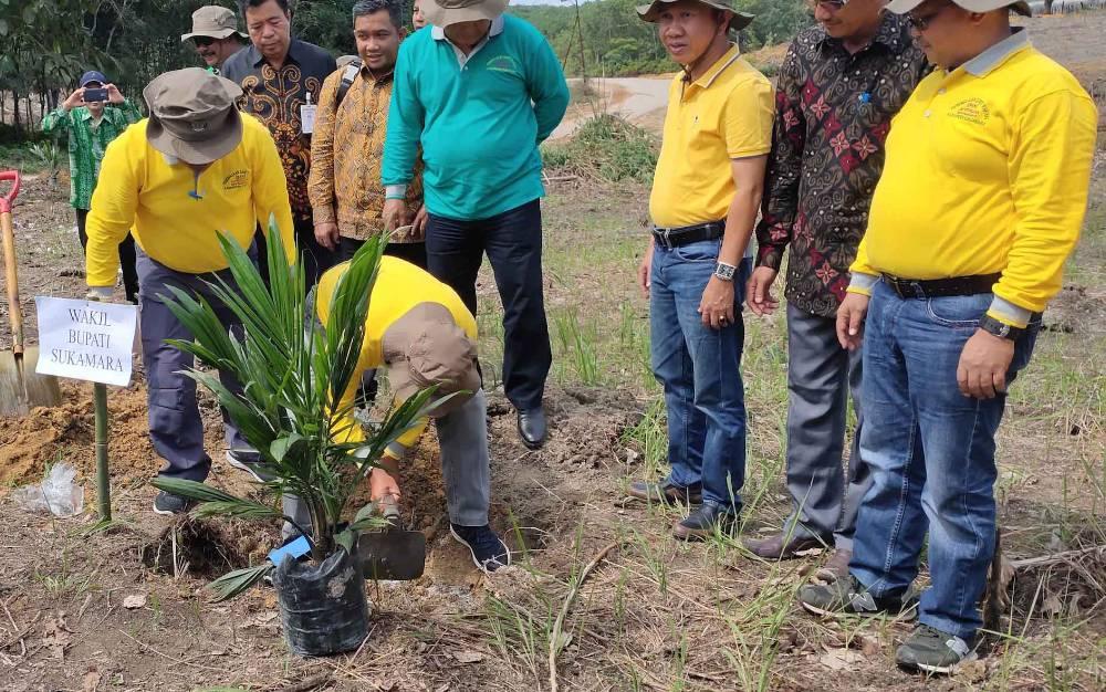 Wakil Bupati Sukamara, Ahmadi saat menanam bibit sawit di Desa Pangkalan Muntai, Kecamatan Sukamara.