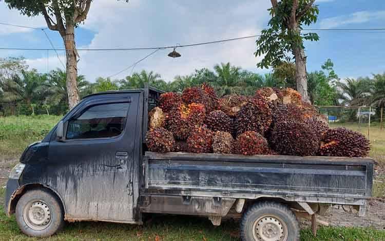 Barbuk mobil pikap dan buah sawit yang diamankan di Polsek Pangkalan Lada.