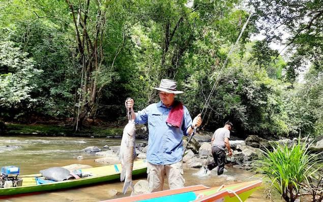 Bupati Lamandau, Hendra Lesmana menenteng ikan somah dengan berat 2 kg lebih saat memancing di Desa Petarikan, Sabtu 13 Maret 2021.