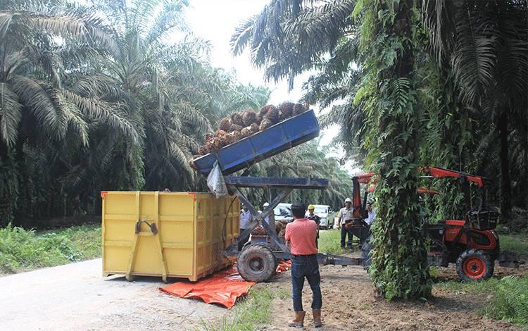 Kegiatan di perkebunan kelapa sawit.