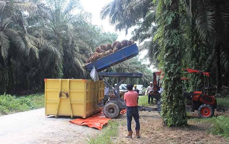 Aktivitas di perkebunan kelapa sawit PT SSMS, Tbk.