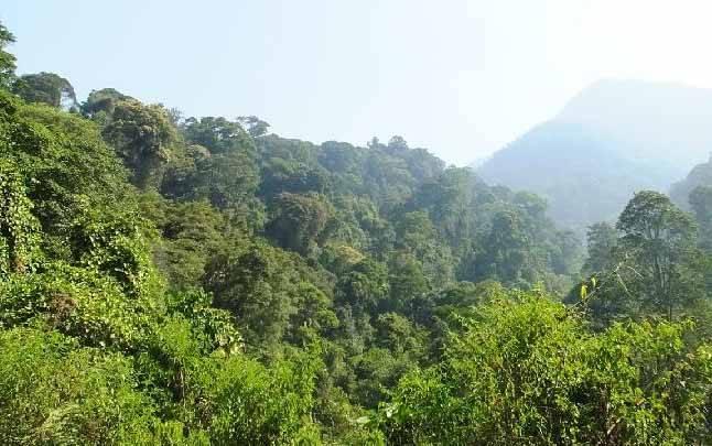 Hutan Cagar Alam Gunung Tilu di Kabupaten Bandung yang menjadi tempat pelepasan Owa Jawa hasil sitaan ke alam liar. (foto : Dok.The Aspinall Foundation via teras.id)