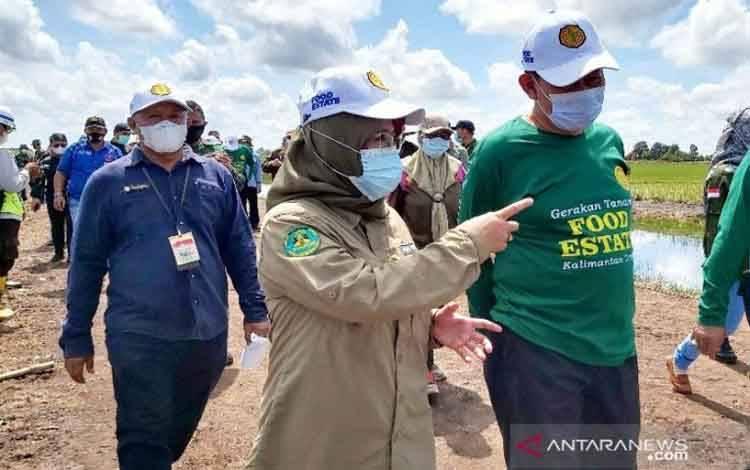 (kanan ke kiri) Sekretaris Jenderal Kementerian Pertanian Momon Rusmono, Kepala Dinas TPHP Kalteng Sunarti dan Kepala BPTP Kalteng Syamsuddin di A5, Desa Bentuk Jaya, Kecamatan Dadahup, Kabupaten Kapuas, Selasa (4/5/2021)