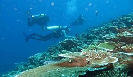 Ilustrasi - Terumbu karang. ANTARA/HO-KKP