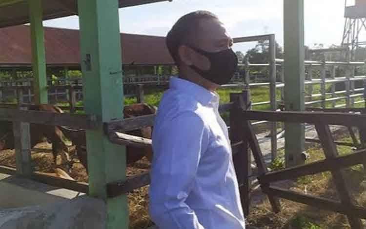 Wali Kota Palangka Raya Fairid Naparin saat meninjai peternakan sapi di RPH Kalampangan