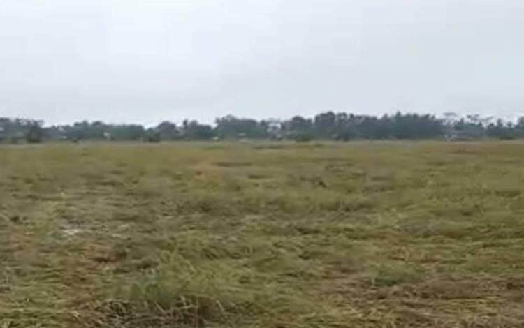 Hamparan padi di sawah roboh karena diterpa angin puting beliung.