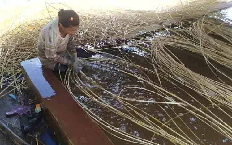 Salah seorang pekerja membersihkan rotan, di Desa Telaga Baru, Kecamatan Mentawa Baru Ketapang.