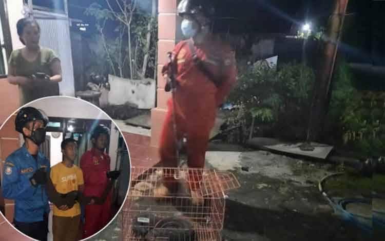 Seekor ular karung yang ditangkap warga dimasukan ke dalam kandang kucing.
