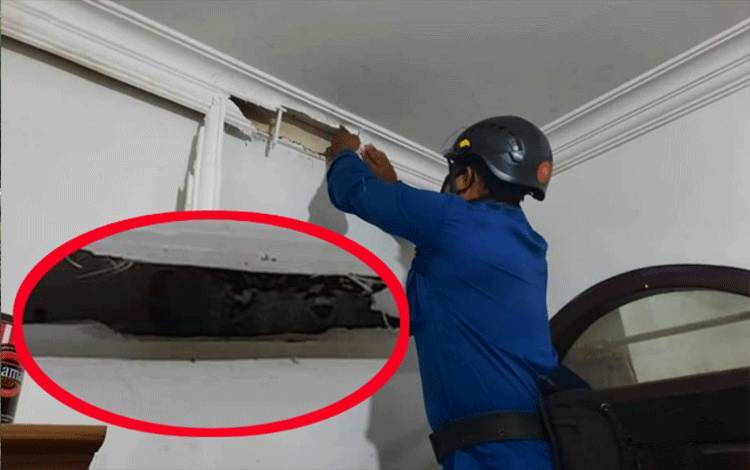 Petugas Disdamkarmat Kotim, terpaksa membongkar bagian rumah pelapor untuk menangkap ular di Jalan Pembina II, Sampit, Kotawaringin Timur.