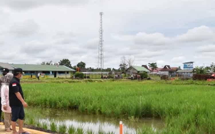 Lahan pertanian di kawasan food estate Kalteng.