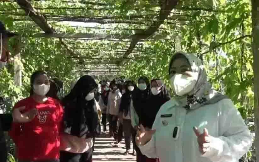 Bupati Kobar Nurhidayah, saat mengunjungi demplot sayur di P4S Karya Baru Mandiri, Desa Kubu, Kecamatan Kumai.