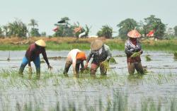 Distanak Diminta Awasi Lahan Pertanian Masuki Musim Kemarau