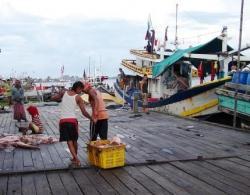 TERUS NAIK: Hasil tangkapan ikan laut oleh nelayan di Kabupaten Suakmara tiap tahun mengalami peningkatan. Data Dislutkan, pada 2013 tangkapan ikan sebanyak 4.726,9 ton dan pada 2014 naik menjadi 4.821,4 ton.
