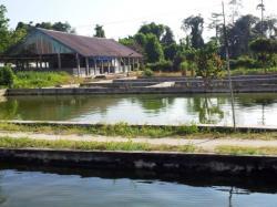 Ilustrasi: Balai Benih Ikan di kawasan Pinang Merah-Pangkalan Bun. Kelompok Tani Seluluk Jaya, Kotawaringin Barat menunggu realisasi bantuan bibit ikan yang dijanjikan Dinas Kelautan dan Perikanan Kalteng. BORNEONEWS/IRWANSYAH