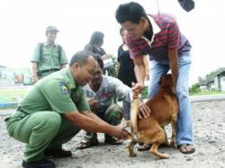 BERI VAKSI : Petugas Distanak Kobar saat memberikan vaksin kepada anjing di Kecamatan Kotawaringin Lama beberapa waktu lalu. Distanak mengimbau masyarakat agar tidak langsung membunuh anjing yang terindiaksi rabies