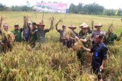 PANEN RAYA : Bupati Gunung Mas Arton S Dohong bersama jajaran pejabat ketika melakukan panen raya di lahan pertanian Sakata Juri Kuala Kurun, Senin (20/4).