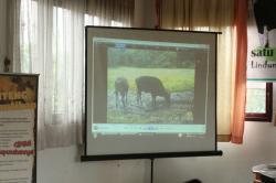PRESENTASI PENEMUAN BANTENG: Presentasi penampakan Banteng Kalimantan atau Banteng Belantikan (Bos Javanicus Lowi) yang digelar Yayasan Orangutan Indonesia (Yayorin) di aula Dinas Pekerjaan Umum (PU) Lamandau, Kamis (21/5/2015).