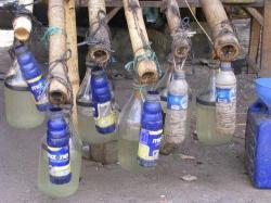 PABRIK ARAK : Pabrik minuman keras jenis arak yang dikelola secara tradisional oleh masyarakat Kabupaten Karangasem, Bali. Sementara itu, mahasiswa menolak dengan tegas langkah Pemkab Kotim yang berencana melegalkan pabrik miras.