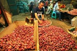 Pedagang menyortir bawang merah.