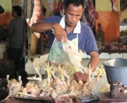 TURUN: Harga ayam potong turun karena pasokan cukup.