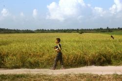Larangan Bakar Lahan Ubah Pola Pertaniandi Seruyan