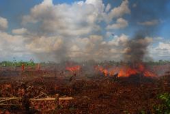 WASPADA: Saat musim kemarau dipastikan kebakaran lahan dan hutan akan terjadi di Gawi Barinjam. Untuk mencegah terjadinya kebakaran hutan dan lahan, Pemkab Sukamara meminta seluruh elemen masyarakat menekan terjadinya kebakaran lahan.