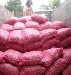 BAWANG MERAH : Warga Kapuas menaikkan bawang merah yang dipanen beberapa waktu lalu. Tahun ini, Pemkab Kapuas menyediakan lahan 50 hektare untuk mengembangkan komoditas ini.