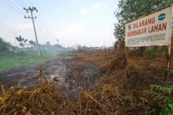KEBAKARAN LAHAN : Kebakaran lahan di dekat papan larangan membakar lahan yang dipasang Dishut Riau beberapa waktu lalu. Sementara itu, sudah tidak ada titik panas (hotspot) di Kabupaten Barsel